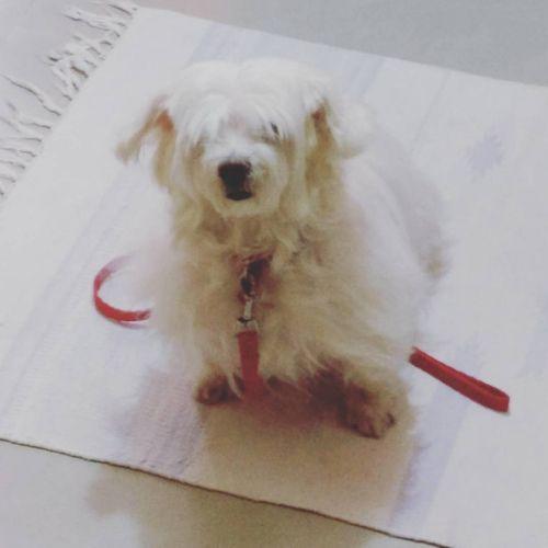 Anupriya's Pet Dog