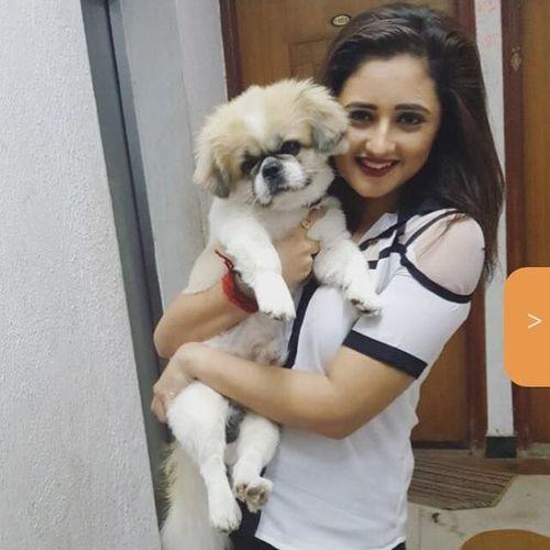 Rashami's Pet Dog